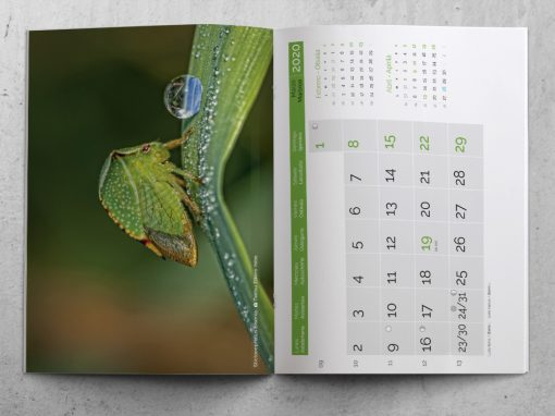 Offset printing of a wall-type magazine calendar